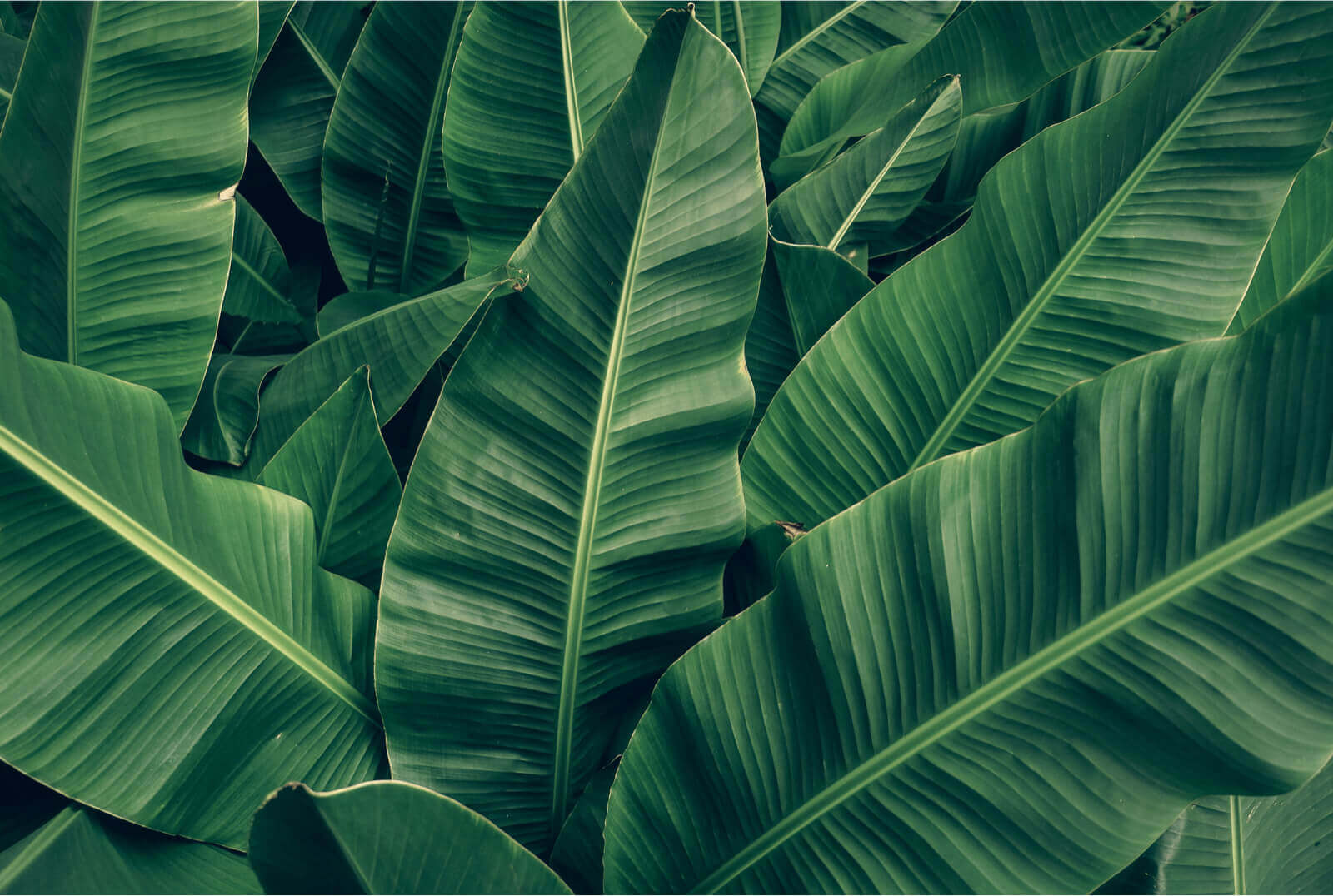 Kade6 plantenadvies